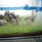 ADA 60P glass stand Dwarf Baby tears HC carpet aquascape planted tank fry start