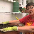 How to Plant Flowers in a Pot