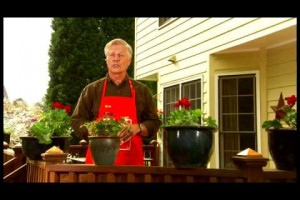 How to Plant Flowers – The Home Depot
