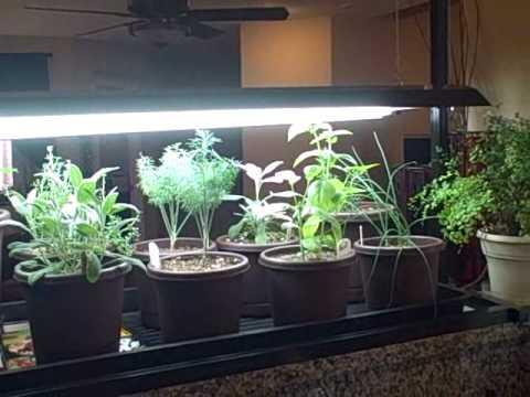 Indoor Kitchen Herb Container Garden And Seedlings Growing