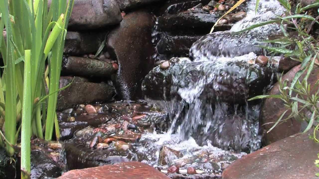 Water Garden Pond Design Qtinycom