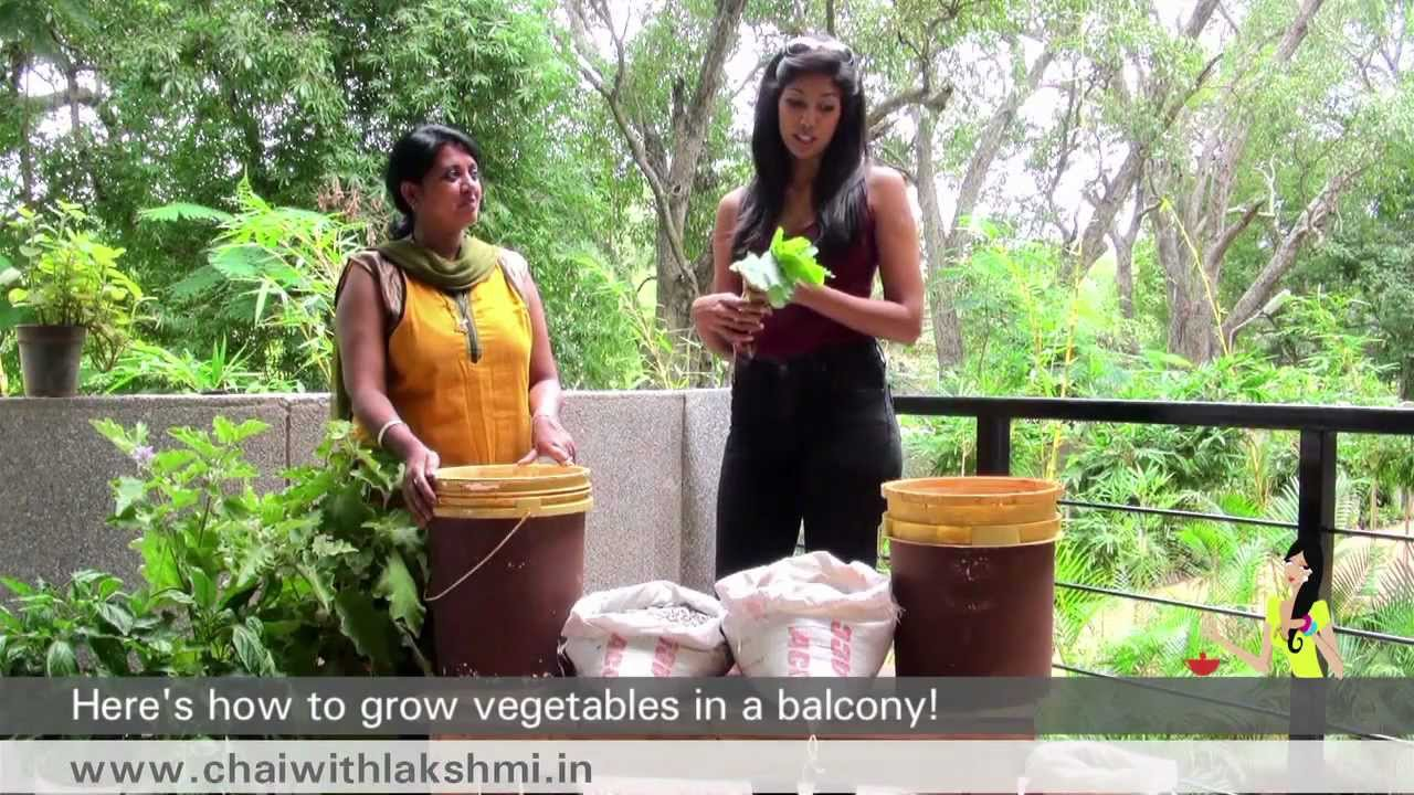 . How to Grow Vegetables in Pots  In 180 Seconds   Qtiny com