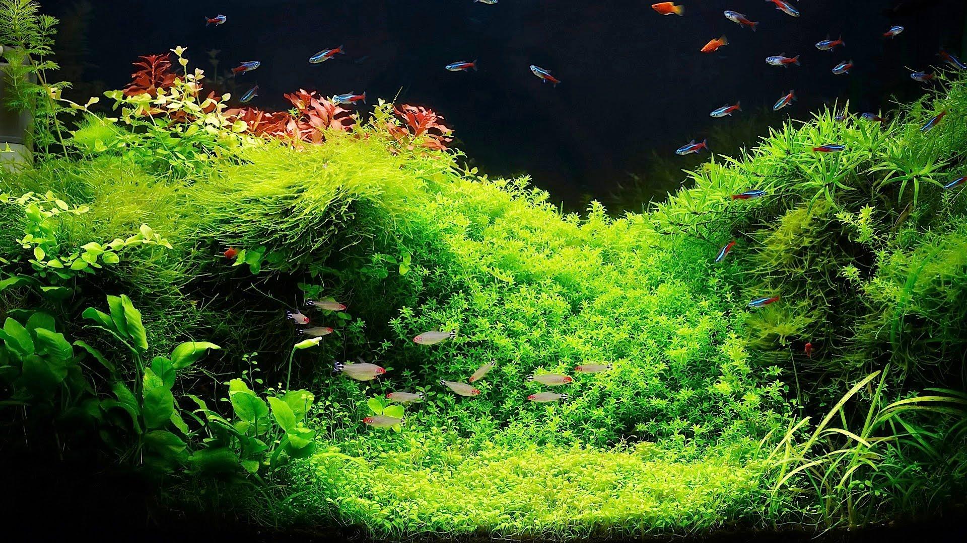 Setting Up a Fish Tank with Live Plants Aquarium Care Qtiny.com