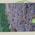 Urban Landscape Design – Living Wall Design – Vertical Garden Design – Custom Landscape Features
