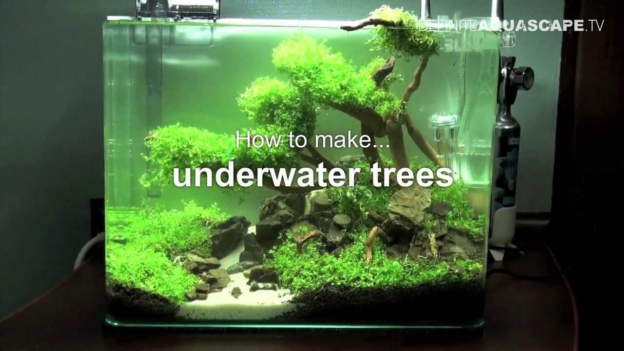 Aquascaping how to make trees in planted aquarium for How to make ice in a fish tank