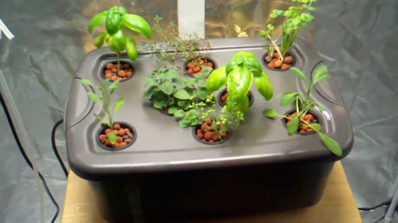 Build a Hydroponic Herb Garden for Cheap by Epic Gardening
