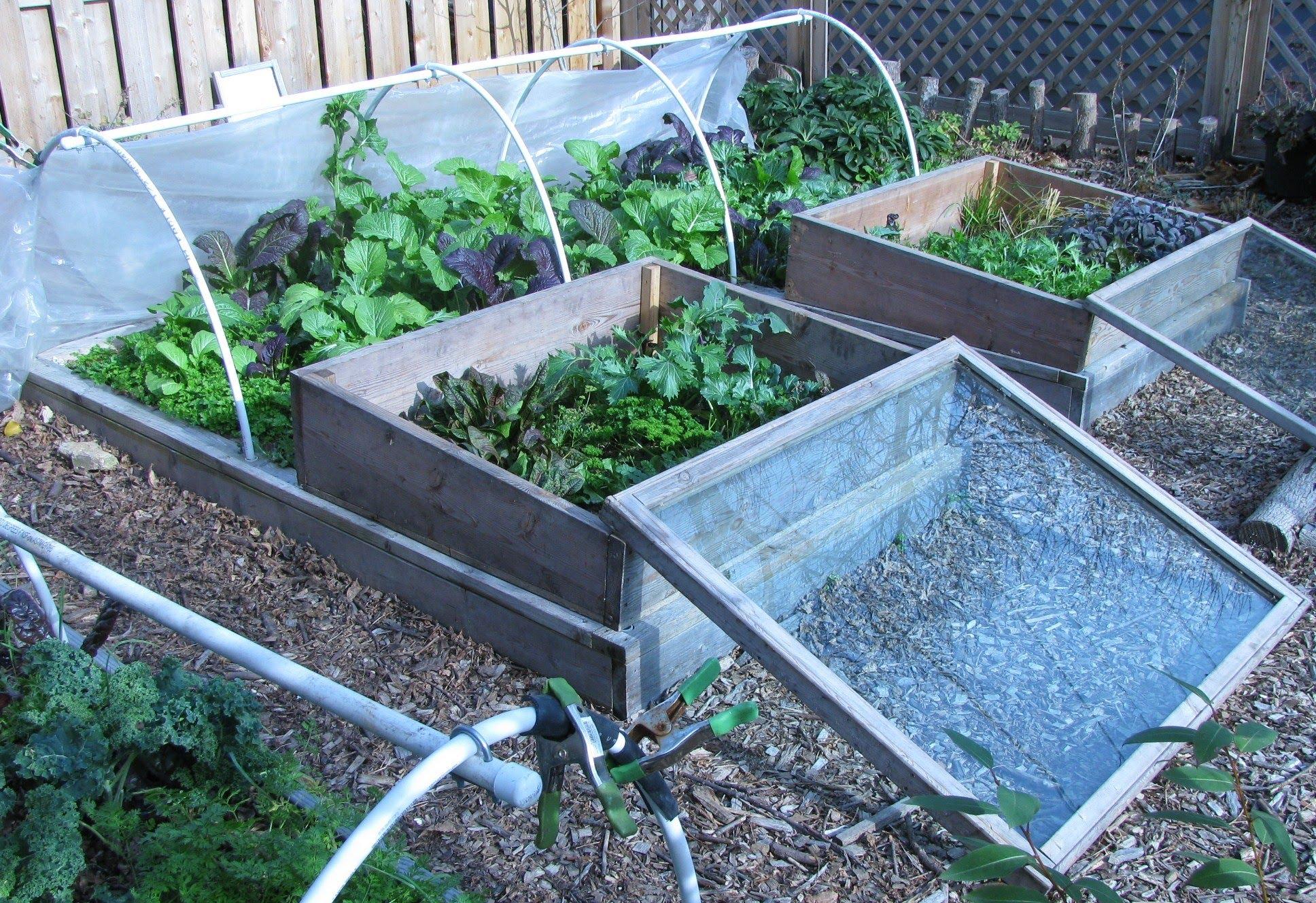 Our FallWinter Garden Low Cost Low Effort Self