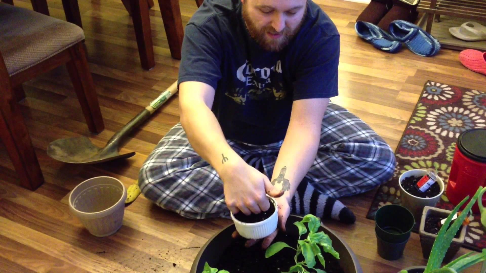 Indoor gardening basil and friends for Indoor gardening expo 2014