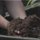 Container Gardening : Container Gardening Soil