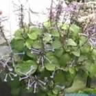 Beginner Gardening Tips & Advice: Easy Plant Care & Garden Maintenance : Giving Plants as Gifts