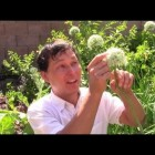 Organic Gardening is My Answer to Cancer