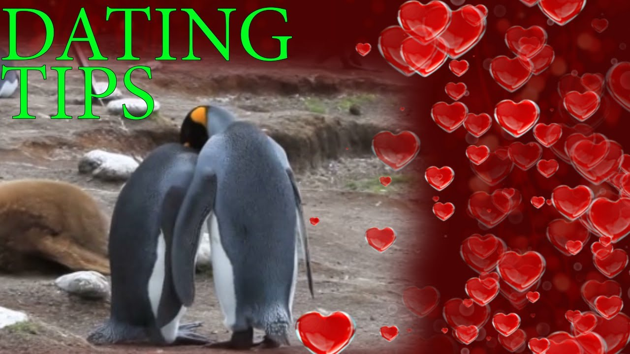 Dating and valentine's day
