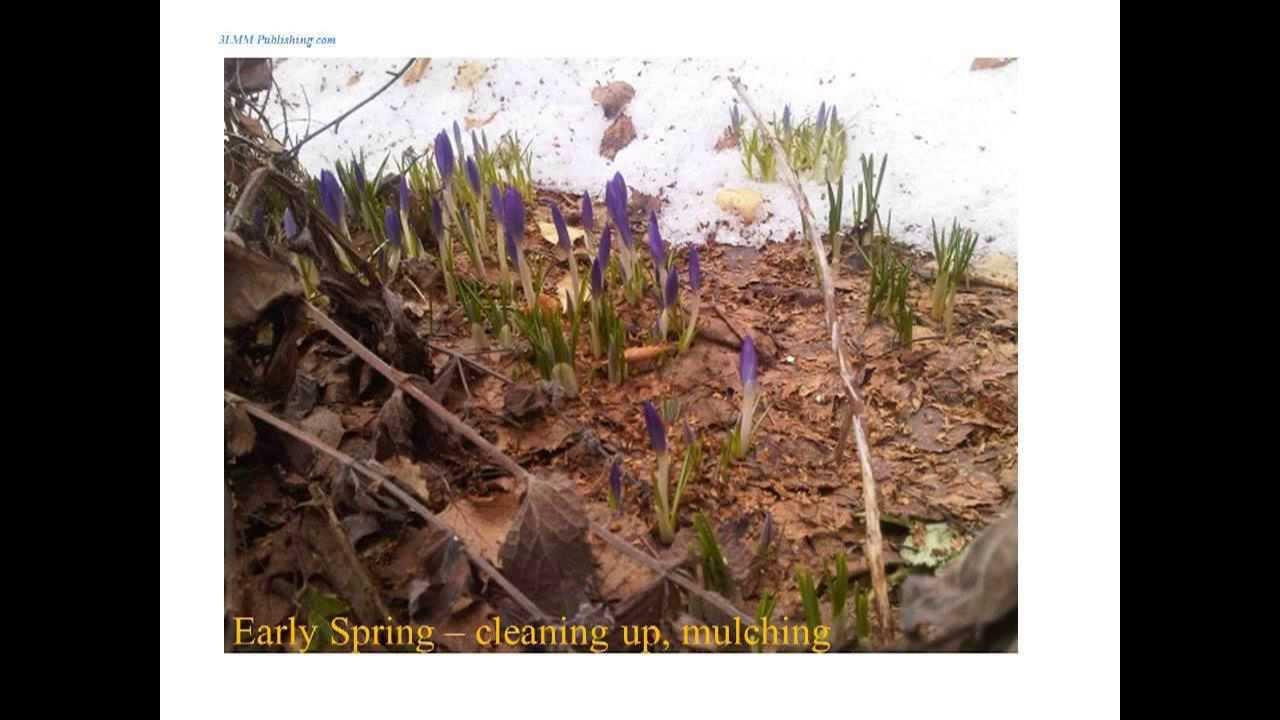 Container gardening for beginners gardening direct gardening leave gardening zones jobs - Gardening for beginners ...