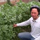 Over a Dozen Leafy Green Vegetables You Can Grow in your Home Garden