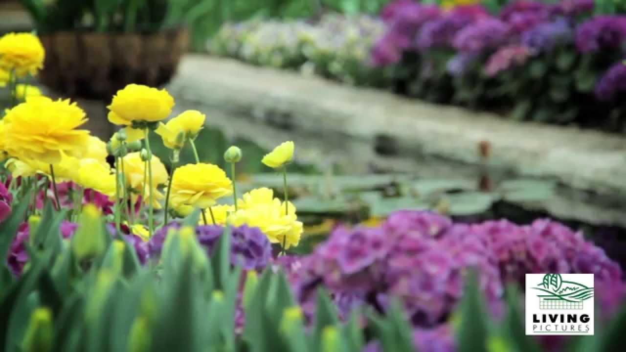 Landscape garden design adelaide for Outdoor garden designers adelaide