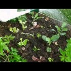 how to grow organic vegetables at home – food4wealth