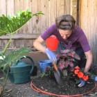 How to Plant a Round Flower Bed Full of Annuals : Beautiful Gardens & Plant Care