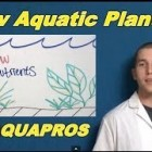 Aquarium Plants Won't Grow? Plant Growth Checklist