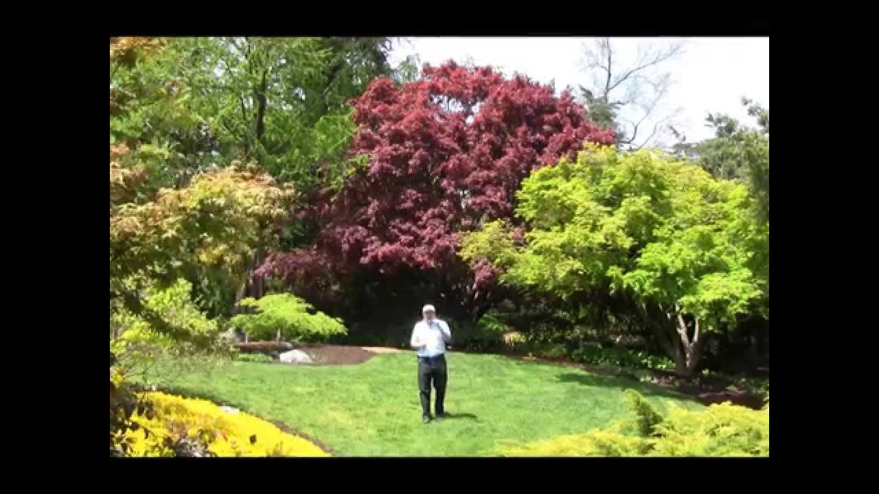 Best Trees For Small Garden Spaces Japanese Maples