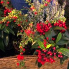 Make a Christmas table decoration – Waitrose Garden