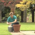 How To Plant A Shrub In A Container