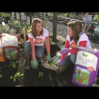 TUI TIME How to grow great vegetables at home in your garden.mov