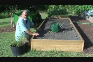 How to Plant Tomatoes (Fall Crop)