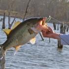 Jerkbait Bass Fishing Tips – How to Retreive a Jerkbait