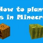 [BASIC TUTORIALS] How to plant seeds in Minecraft?