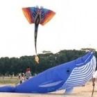 Kite Festival Singapore – NTUC Income Kite Festival Singapore 2013