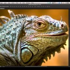Photography Tips & Tricks: Olloclip 3 in 1 and Zoo Photography – Episode 69