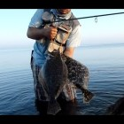 Wading Fishing for Flounder Tips and Tricks How To Artificial Lures