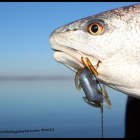 How To Rig A Soft Plastic Flats Fishing Lure