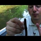 How to Texas Rig a Soft Plastic Fishing Lure