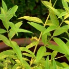 How to Grow Herbs in Small Spaces   At Home With P. Allen Smith