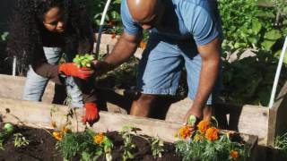 Vegetable Gardening: How To Plant Tomatoes