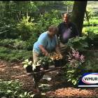 Grow it Green: Gardening in the shade