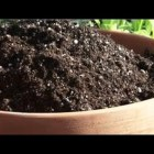 Indoor Gardening Tips : How Do I Sterilize a House Plant's Potting Soil?