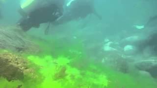 [원투고W다이브] 2기 강원도 고성군 1박2일 해양실습