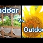 Suburban Aquaponics – Indoor Vs Outdoor Gardening