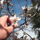 My Almond Tree–unlocking the food…