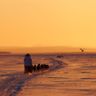 The 2015 Iditarod Now Scheduled to Run From Fairbanks to Nome.