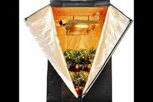 Indoor Gardening!